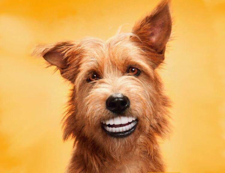 creativ pes.jpg